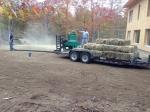 seeding the lawn